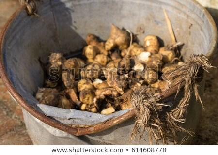 Jerusalem artichokes stored in vintage zinc bucket Stock photo © Klinker
