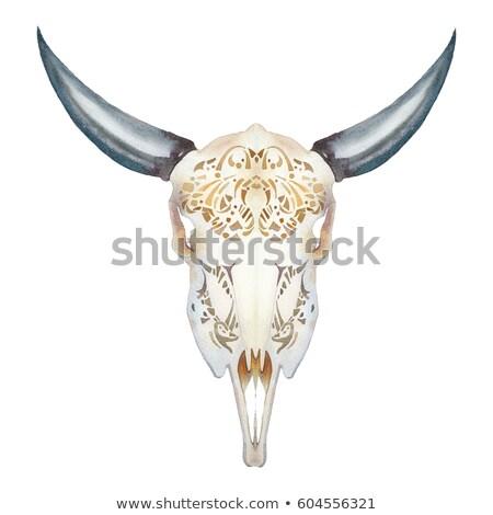Buffalo skull on white Stock photo © stoonn