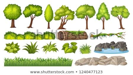 Rock water tree Stock photo © bobkeenan