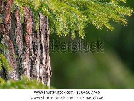 Enfeitar árvores pormenor fundo beleza Foto stock © elxeneize