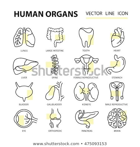 Linha colorido ícones coleção medicina médico Foto stock © PureSolution