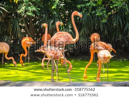 Birds in Zoo in Bangkok Stock photo © bloodua