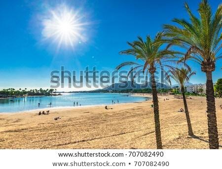 Alcudia beach Stock photo © speedfighter