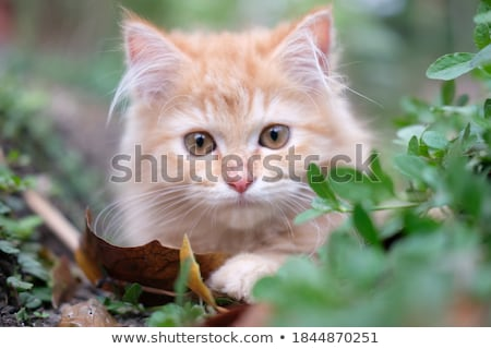 cute · kat · gras · tuin · huis · baby - stockfoto © meinzahn