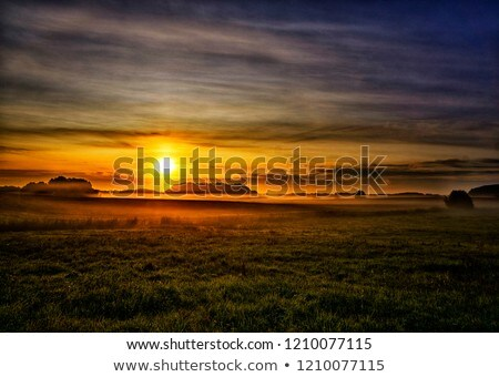 Tranquil grassland at sunrise Stock photo © digoarpi