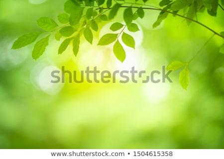 Geel bladeren aarde park klaar boom Stockfoto © Paha_L
