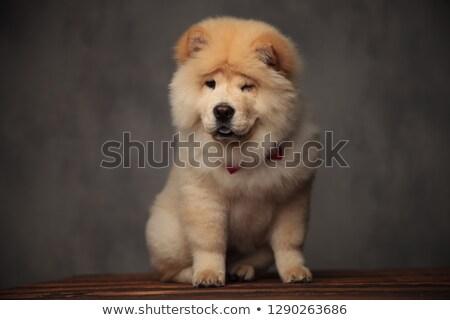 kutya · kacsintás · fekete · barna · bőr · szem · állat - stock fotó © feedough