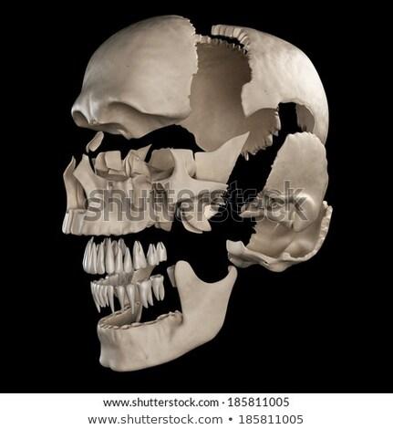 Humanismo crânio vista lateral branco Foto stock © Pixelchaos