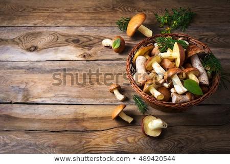 Picking Bolete Mushroom Photo stock © TasiPas