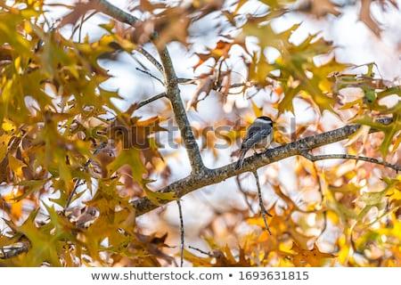doğa · kuş · hayvan · orman · açık · havada · yaban · hayatı - stok fotoğraf © brianguest