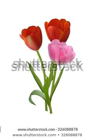 Rood · tulp · vector · wenskaart · verbazingwekkend · bloem · vector - stockfoto © beholdereye