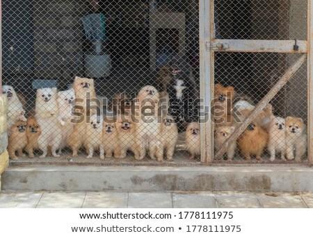 Aviary Stock photo © bedo