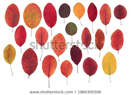 őszi levelek levelek tele ősz szín piros Stock fotó © ca2hill