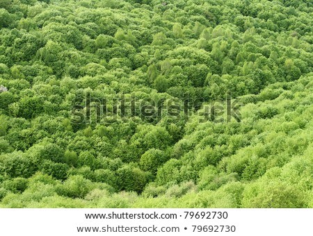 Forest canopy as seen from above Stock photo © Arrxxx