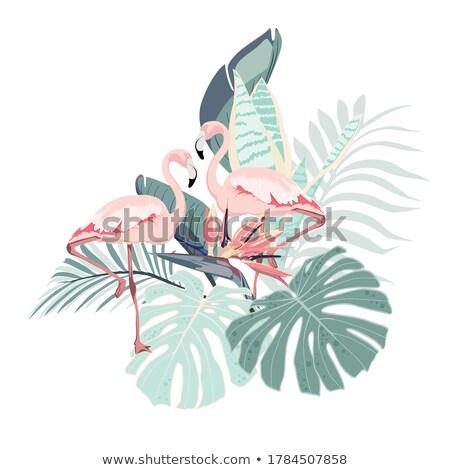 Flamingo pássaro ilustração projeto natureza tropical Foto stock © nezezon