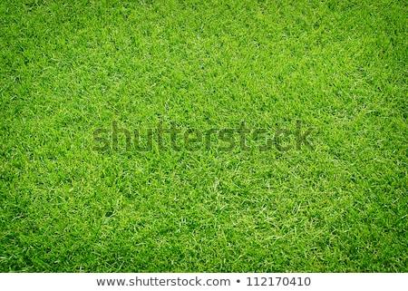 пышный травой поле луговой текстуры трава Сток-фото © dmitry_rukhlenko