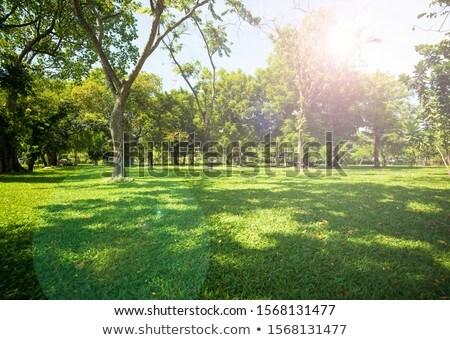 híd · napos · zöld · erdő · fák · tavasz - stock fotó © photocreo