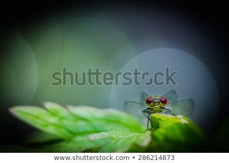 penge · fű · tavasz · zöld · szín · légy - stock fotó © sweetcrisis