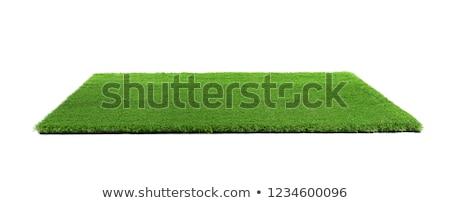 green grass cover Stock photo © mycola