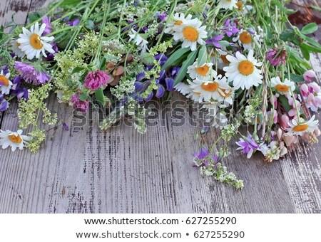 campo · flores · camomila · belo · flor - foto stock © nizhava1956