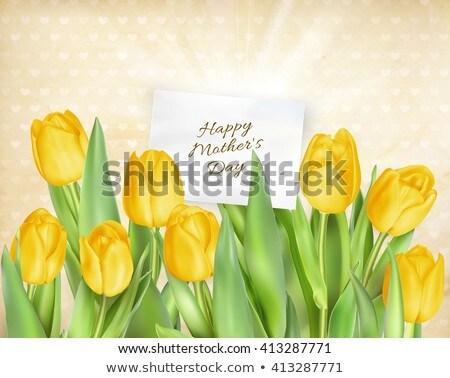 fehér · piros · citromsárga · tulipán · virág · izolált - stock fotó © beholdereye