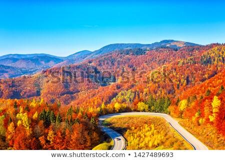 Verbazingwekkend kleurrijk najaar bos asfalt Stockfoto © galitskaya