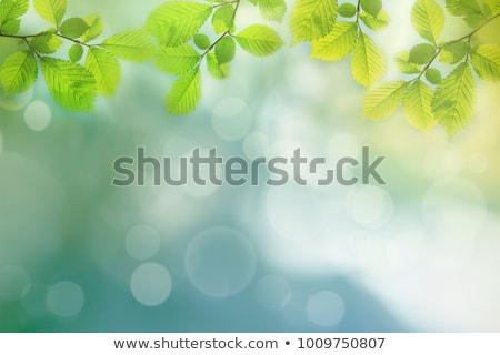 Tavasz friss lomb keret zöld levelek napfény Stock fotó © Kotenko