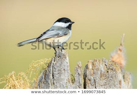 Stok fotoğraf: Doğa · kuş · hayvan · orman · açık · havada · yaban · hayatı