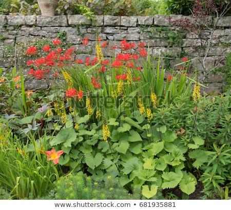 çiçekler ülke bahçe çiçek bahar doğa Stok fotoğraf © Frankljr