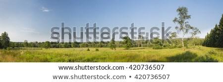 широкий пейзаж деревья лет области зеленый Сток-фото © meinzahn