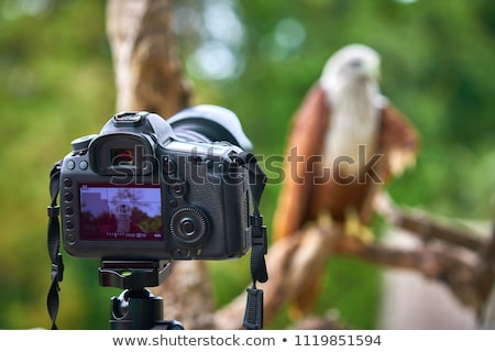 Resim hayvan kamera hayvanlar form ahtapot Stok fotoğraf © Olena