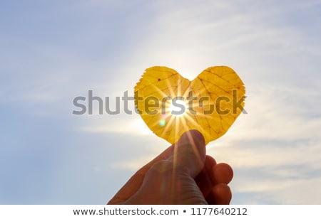 Mano amarillo luz jóvenes manos Foto stock © ra2studio