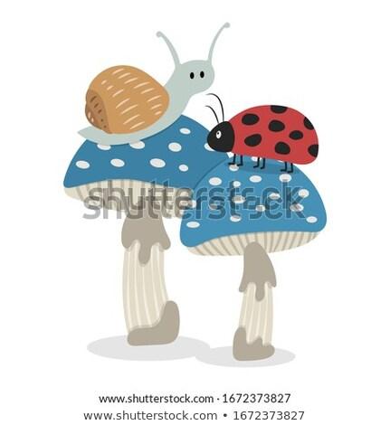 гриб Ladybug иллюстрация белый трава фон Сток-фото © colematt