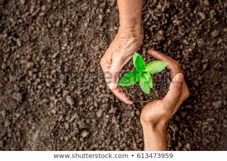 woman holding plant growing in handful of soil Stock photo © dolgachov