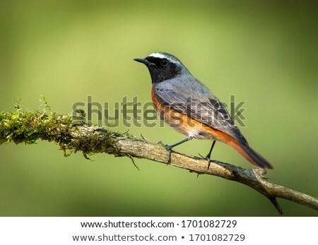 jovem · preto · ninho · primavera · natureza · jardim - foto stock © asturianu