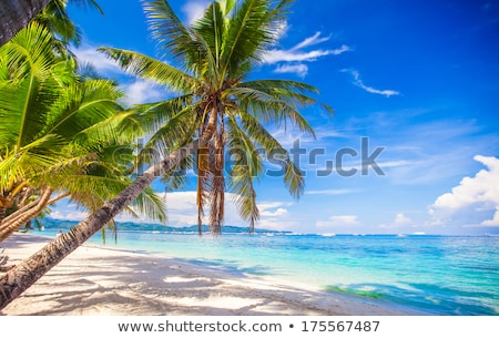 One green tree on the beach Stock photo © jrstock