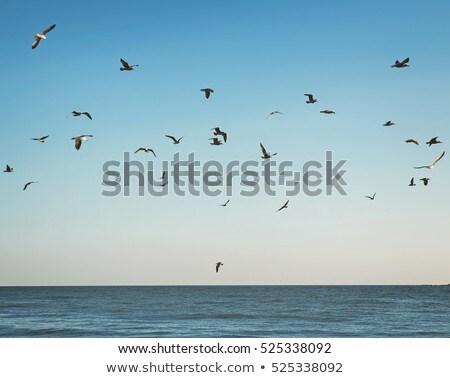 gull over blue sky Stock photo © taviphoto
