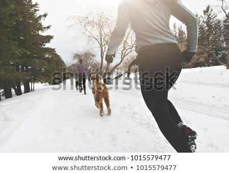 Canicross Sled Dogs Pulling the Young Womanin winter season Stock photo © Lopolo