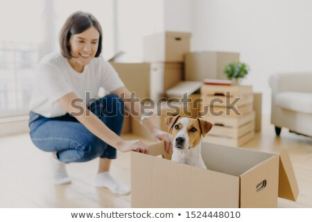 Happy young female house owner poses near cartboard box with favourite pet, have fun during day of r Stock photo © vkstudio