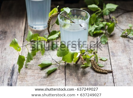 Birch juice, traditional Russian spring drink Stock photo © furmanphoto