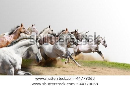 beautifull race-horse Stock photo © oblachko