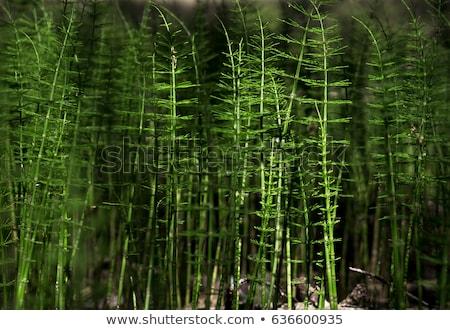 yeşil · bitkiler · mavi · gökyüzü · gökyüzü · arka · plan · yaz - stok fotoğraf © pzaxe