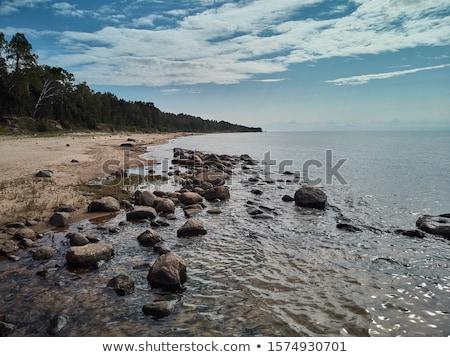 pedras · coberto · alga · praia · paisagem · fundo - foto stock © smithore