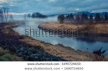 Trees on a grassy dike with fog Stock photo © Hofmeester