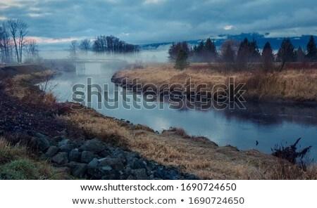 grama · outono · floresta · abstrato · natureza · fundo - foto stock © hofmeester