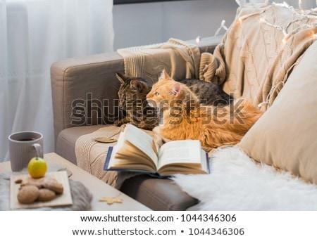 iki · kediler · kanepe · kitap · ev · Evcil - stok fotoğraf © dolgachov