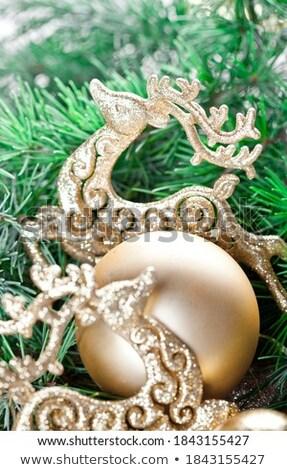 Evergreen tak gouden herten bruin Stockfoto © marylooo