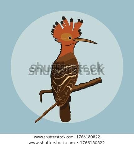 Upapa bird Stock photo © colematt