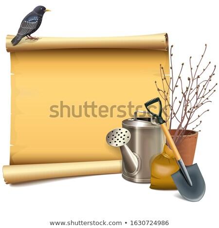 Vector hârtie derulaţi grădină izolat Imagine de stoc © dashadima
