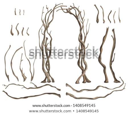 ürpertici bitki renkli örnek vektör Stok fotoğraf © derocz